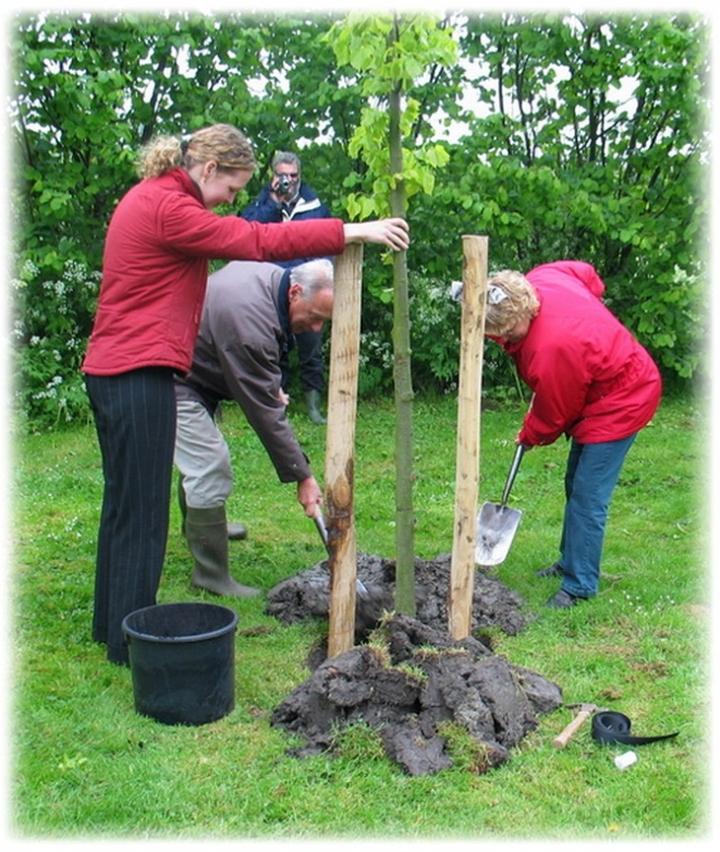 Bomen Op Erfgrens.Hoe Plant Ik Een Boom Of Struik Stichting Landschapbeheer Zeeland